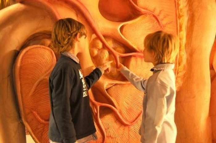 Corpus - Ταξίδι στο ανθρώπινο σώμα